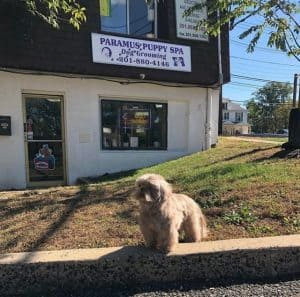 Dog Grooming- Paramus-NJ